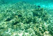 Poissons de coraux