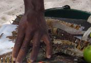 Découpage des langoustes
